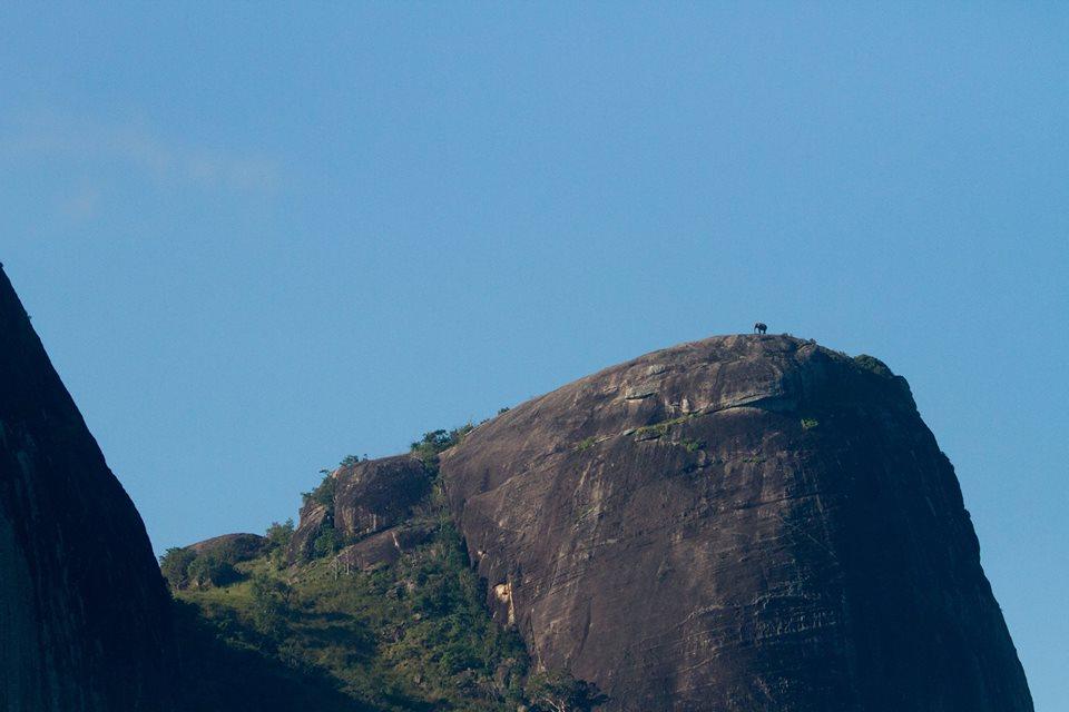 Um elefante no topo de uma montanha.