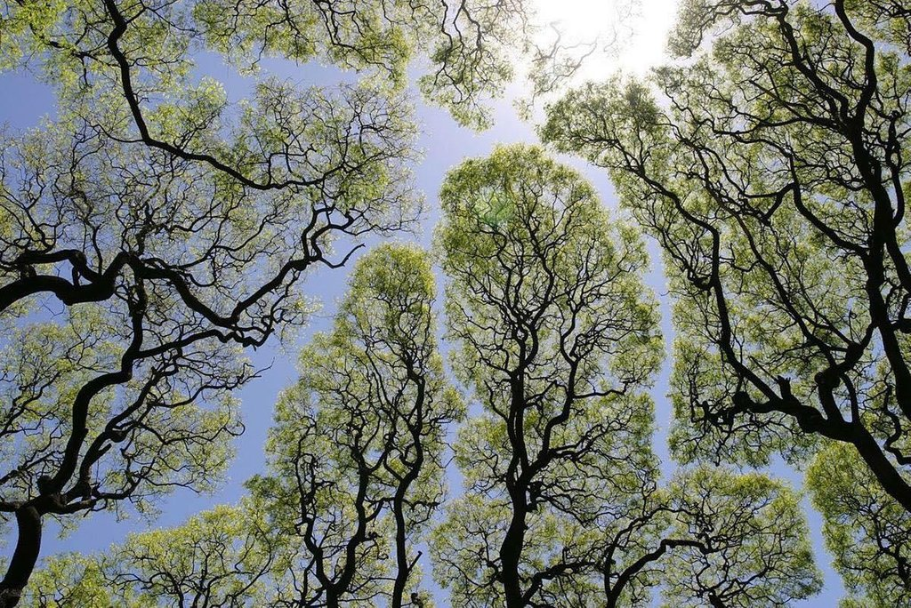 A timidez das árvores.