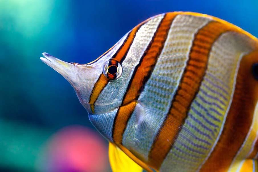50 fotografias surpreendentes XII - Peixes coloridos exóticos