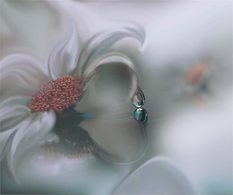 50 fotografias surpreendentes VII - Flores deslumbrantes