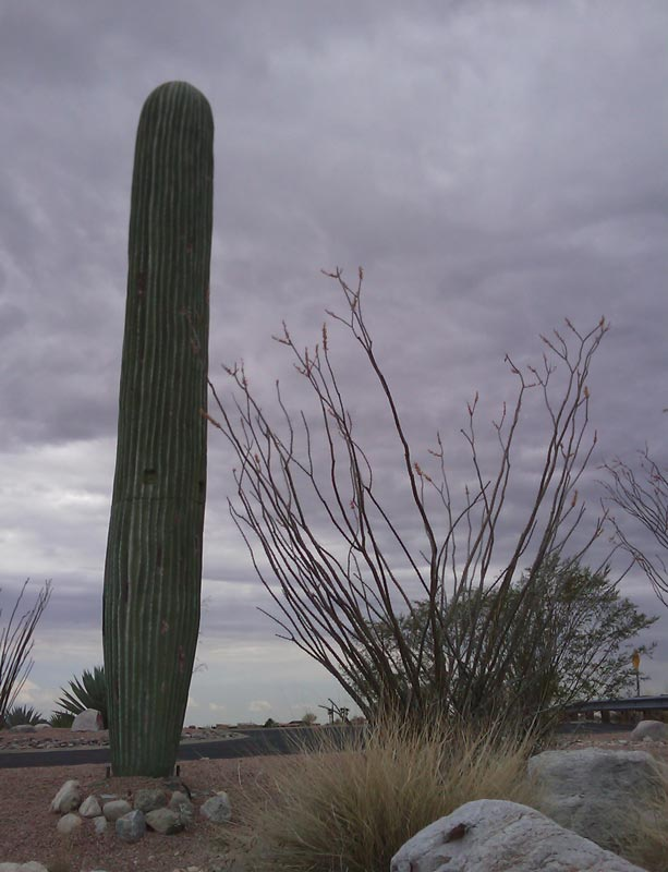 31 Exemplos de torres de celular disfarçadas 08