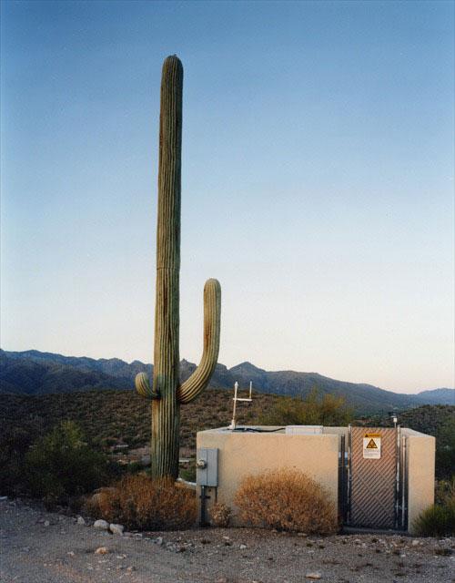 31 Exemplos de torres de celular disfarçadas 10