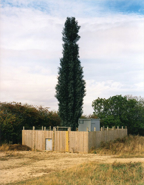 31 Exemplos de torres de celular disfarçadas 16