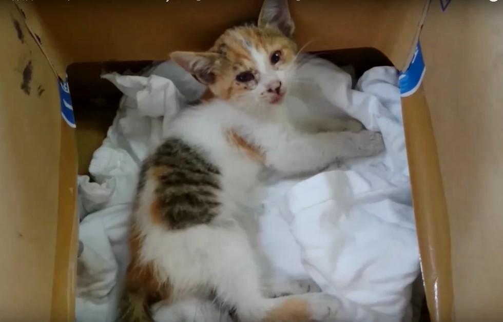 A transformação deste gatinho vai te impressionar