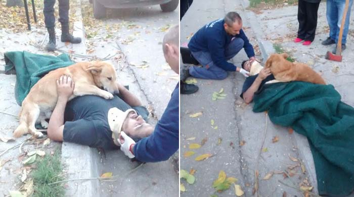 Tony, o cãozinho que abraçou seu dono até a chegada do resgate