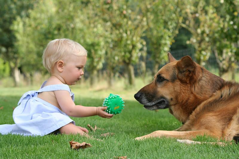 Ter um cão em casa poderia reduzir o risco de eczema e os sintomas da asma nas crianças