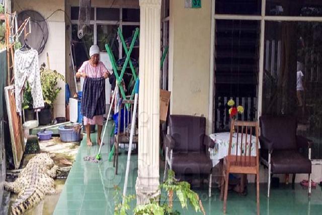 Família da Indonésia divide sua casa com um enorme crocodilo há mais de 20 anos