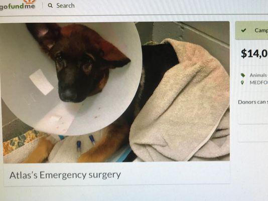 Deu uma surra de morte em seu cão e usou as fotos para arrecadar quase 50 mil reais emn uma vaquinha