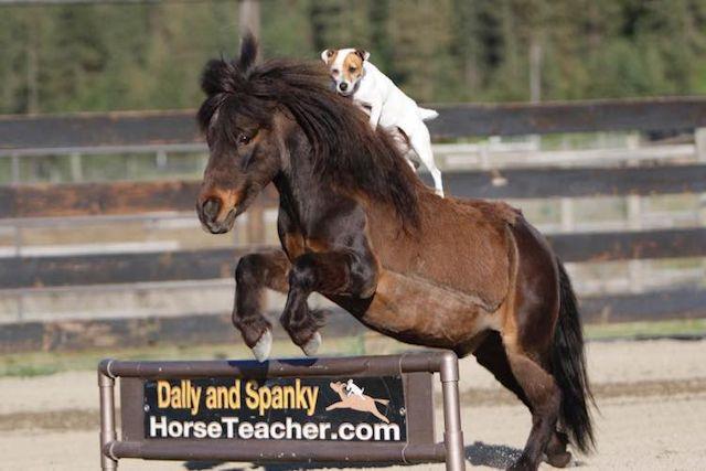 Este cãopeão cavalga um cavalo melhor do que você